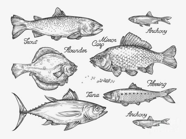 Hand Drawn Fish. Sketch Trout, Carp Poster