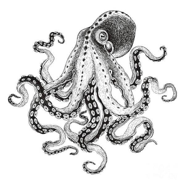 Hand-drawn Illustration Octopus, Vector Poster