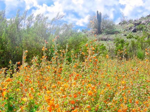 Heavenly Home In Arizona Poster