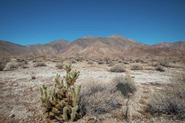 High Desert Cactus Poster