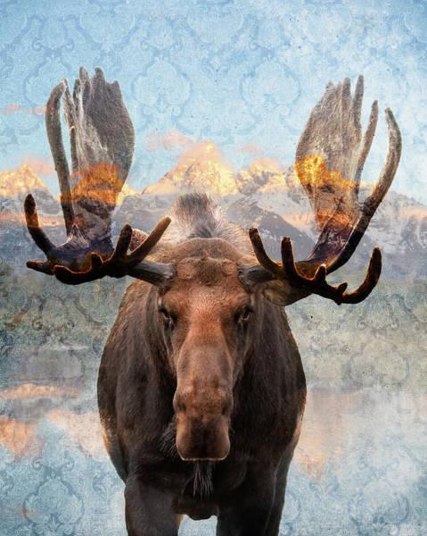 Hometown Moose Poster
