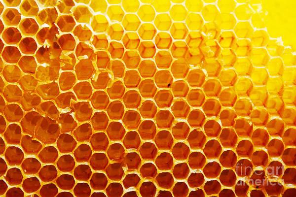 Honey Beehive Poster