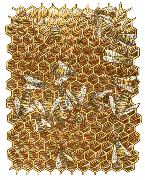 Poster featuring the drawing Honey Bees by Clint Hansen