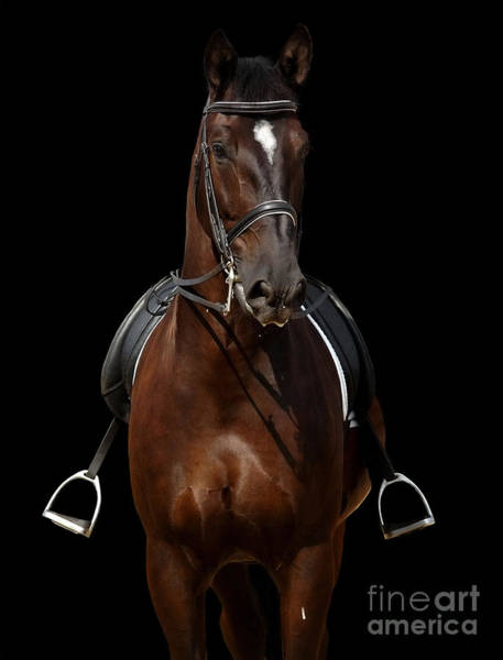 Horse Isolated On Black Poster