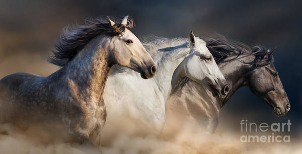 Horses With Long Mane Portrait Run Poster