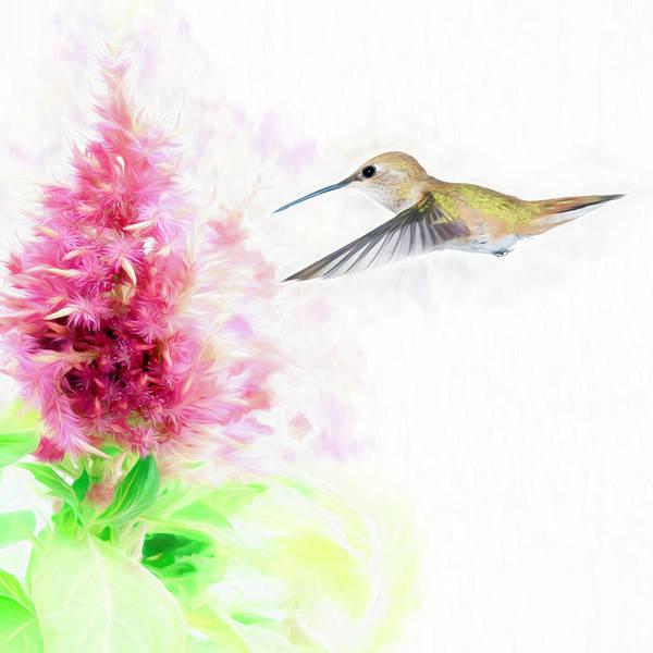 Hummingbird Pastels Poster