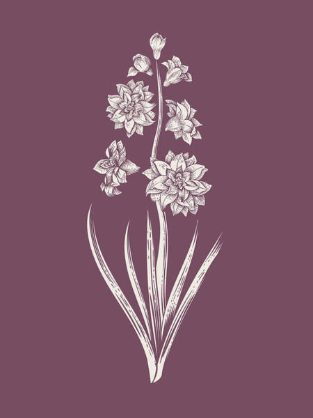 Hyacinth Purple Flower Poster