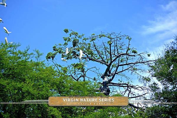 Ibis Risen - Virgin Nature Series Poster