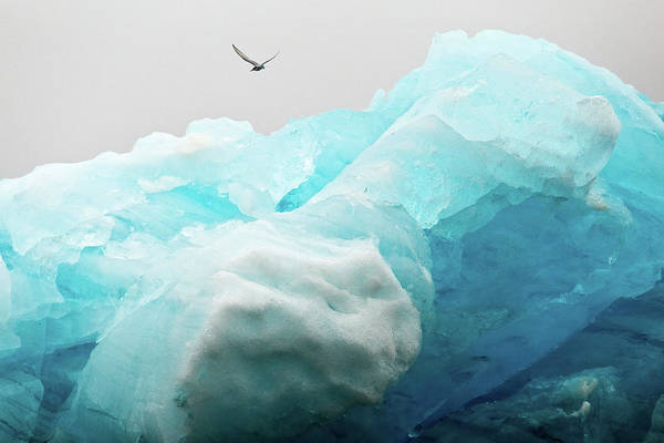Poster featuring the photograph Iceland Iceberg by Nicole Young