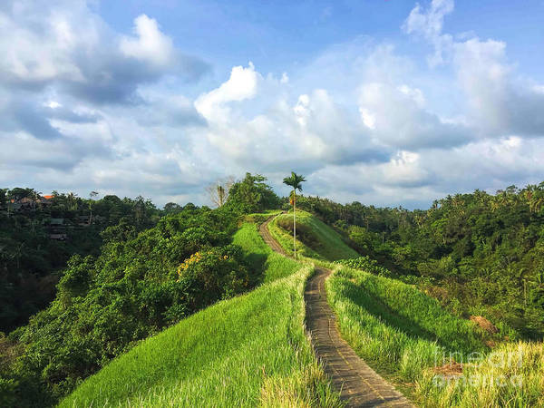 Idyllic Walking Path On Top Of Green Poster