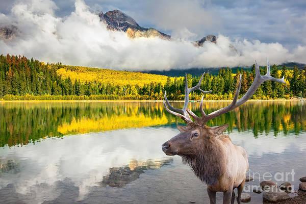 Jasper National Park In The Rocky Poster