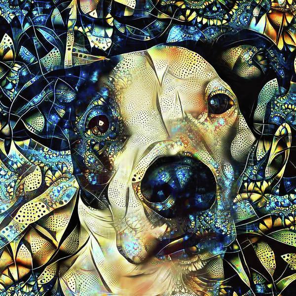 Joshua The Staffordshire Terrier Great Dane Cross Poster