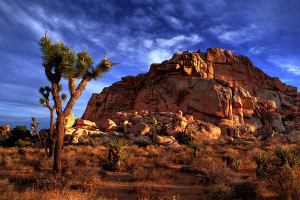 Joshua Tree And Rock Pile Poster