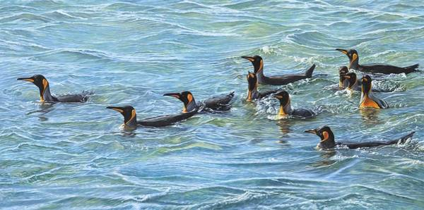 Poster featuring the painting King Penguins Swimming by Alan M Hunt