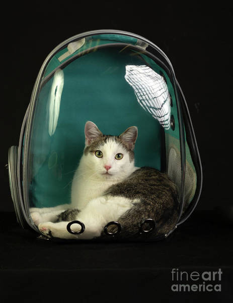 Kitty In A Bubble Poster