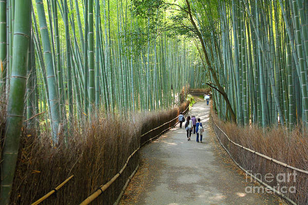 Kyoto, Japan - Green Bamboo Grove In Poster