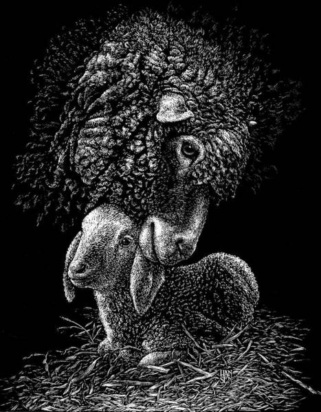 Poster featuring the drawing Lamb by Clint Hansen