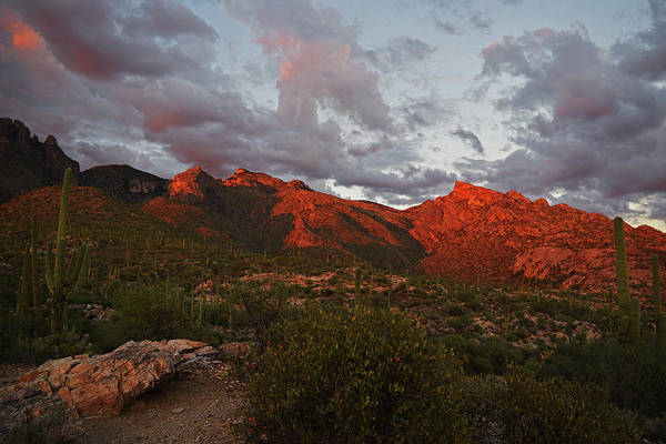 Last Light On Catalina Mountains Poster