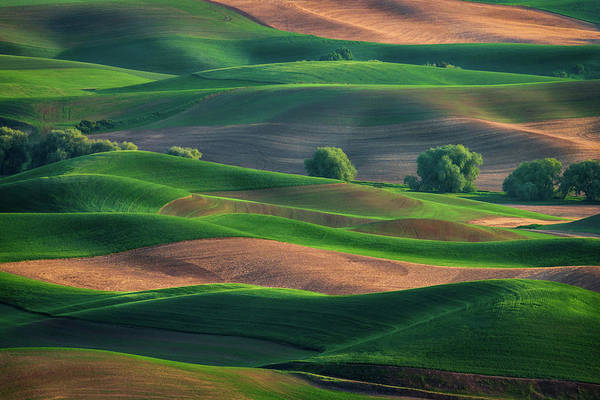 Late Afternoon In The Palouse Poster