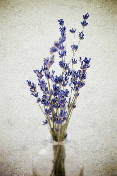 Poster featuring the photograph Lavender by Nicole Young