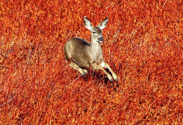 Leaping Deer Poster