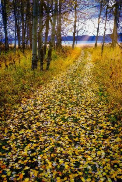 Leaves On Trail Poster