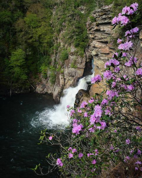 Linville Falls Carolina Rhododendron Poster