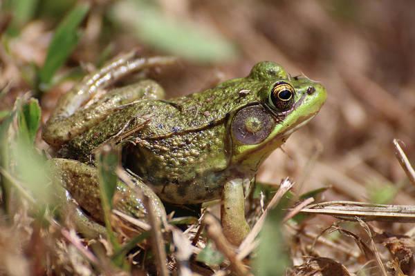 Little Green Frog Poster