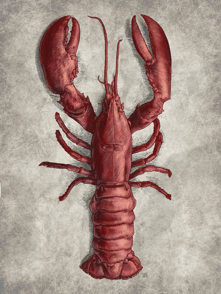 Poster featuring the drawing Lobster by Clint Hansen