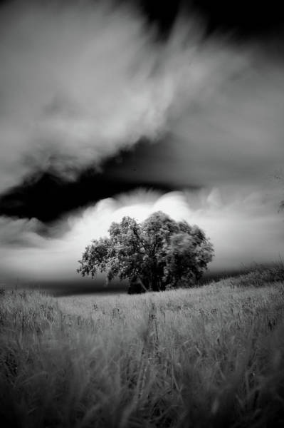 Lone Tree On A Hill Poster