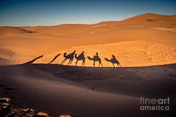 Long Shadows Of Camel Caravan In The Poster