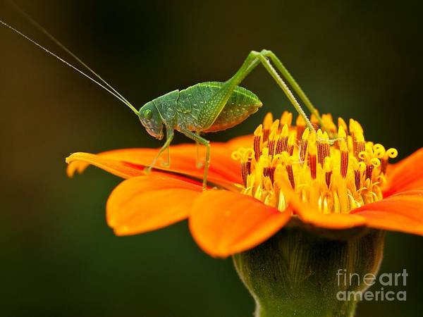 Macro Photos From Insects, Nature And Poster
