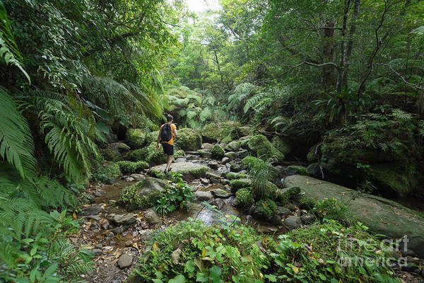 Man Exploring Dense Tropical Jungle And Poster