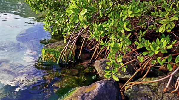 Mangrove Bath Poster