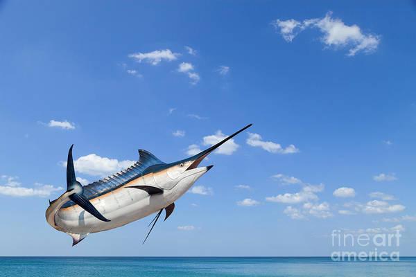 Marlin - Swordfish,sailfish Saltwater Poster