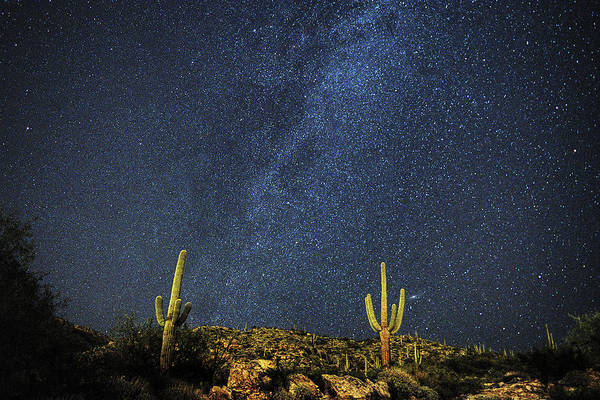 Milky Way And Cactus Poster