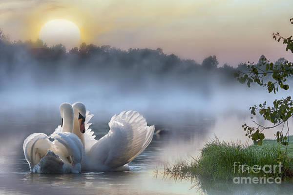 Misty Swan Lake Poster