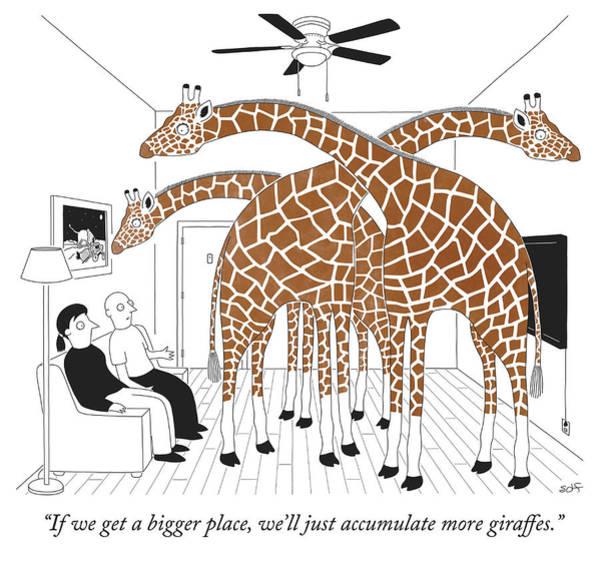 More Giraffes Poster