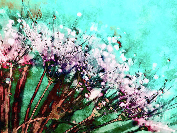 Morning Dew On Dandelions Poster