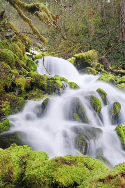 Poster featuring the photograph Mossy Falls by Nicole Young
