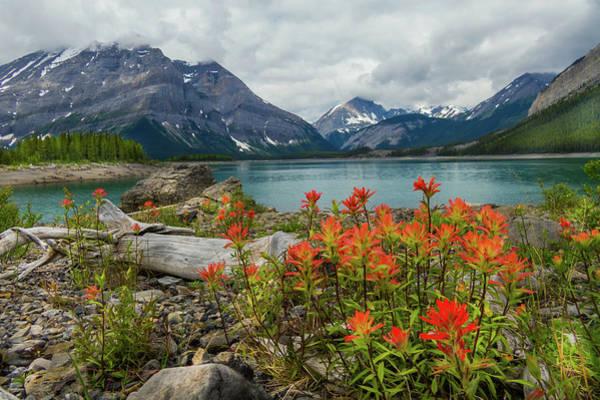 Mountain Flora Poster