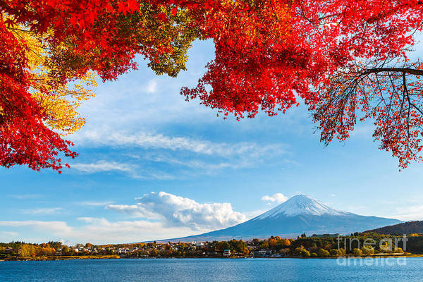 Mt. Fuji In Autumn Poster