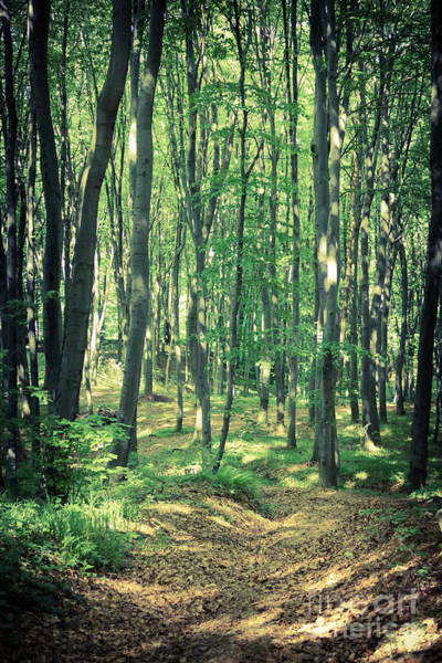 Mysterious Dark Forest Near Rzeszow Poster