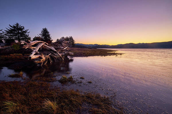 Poster featuring the photograph Nehalem Bay Sunrise by Whitney Goodey