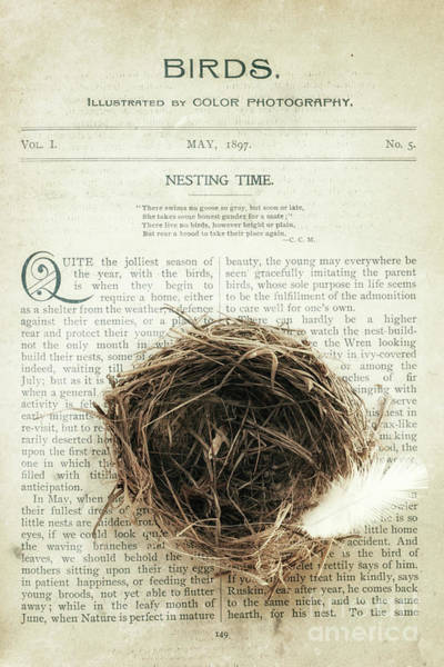 Nesting Time Poster