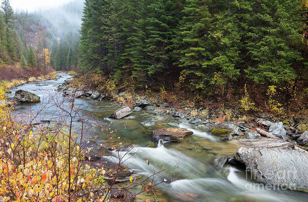 North Fork Of The St. Joe River Autumn Poster