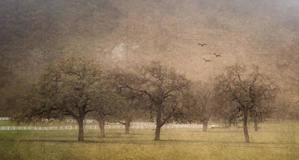 Oak Trees In Fog Poster