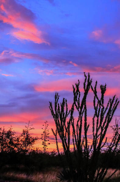 Poster featuring the photograph Ocotillo Sunset 1 by Dawn Richards
