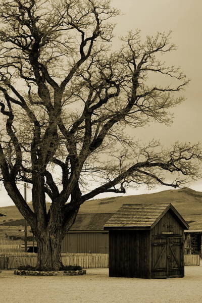 Old Shanty In Sepia Poster