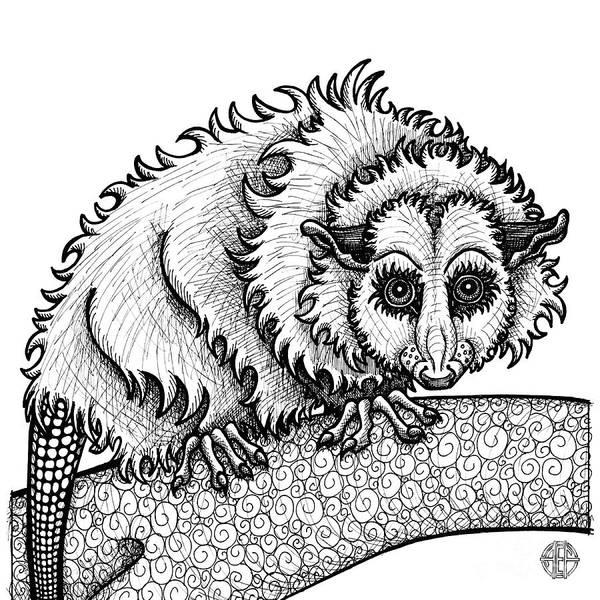 Opossum Poster